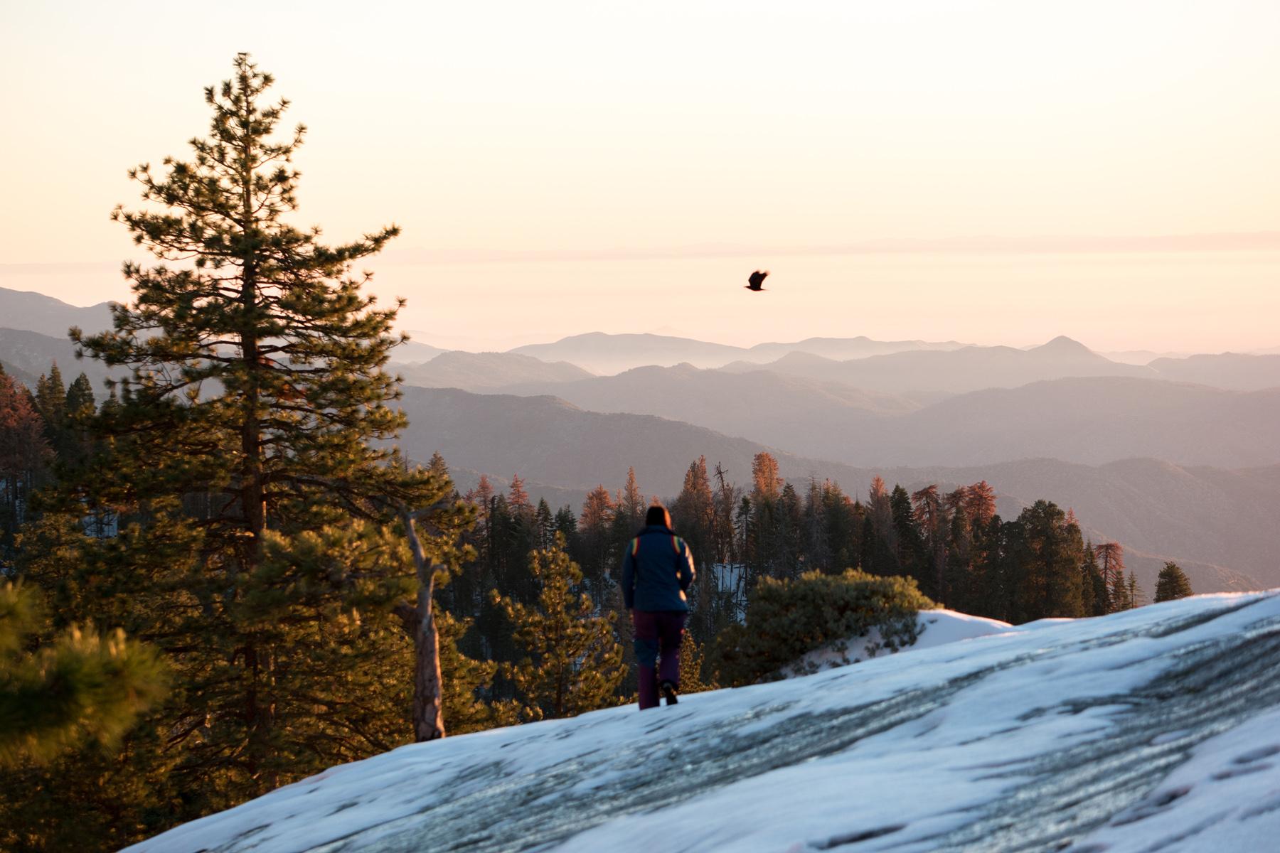 Wasim Muklashy Photography_Sequoia National Park_California_December 2015_-SAM_4163.jpg