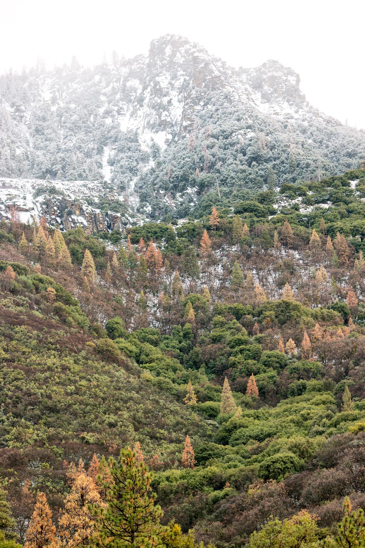 Wasim Muklashy Photography_Sequoia National Park_California_December 2015_-SAM_4281-Edit.jpg