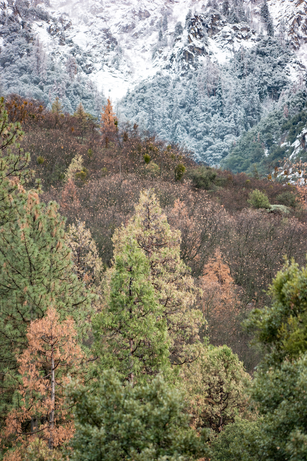 Wasim Muklashy Photography_Sequoia National Park_California_December 2015_-SAM_4288.jpg