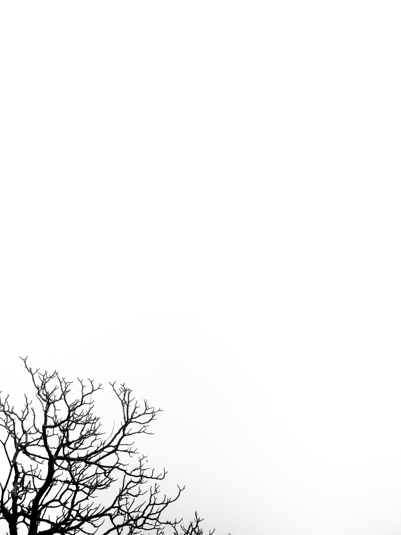 Wasim Muklashy Photography_Sequoia National Park_California_December 2015_-SAM_4312.jpg