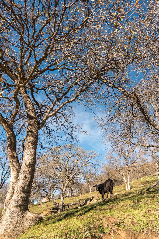 Wasim Muklashy Photography_Three Rivers Ranch_Around_02.jpg