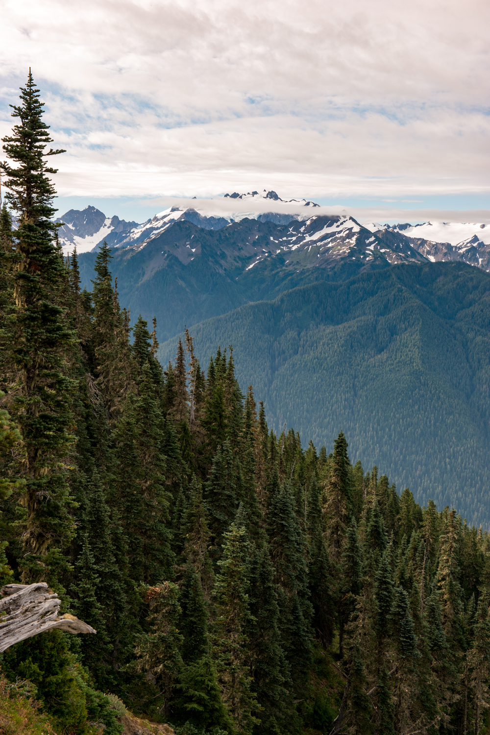 Wasim Muklashy Photography_Olympic National Park_High Divide Loop_037.jpg