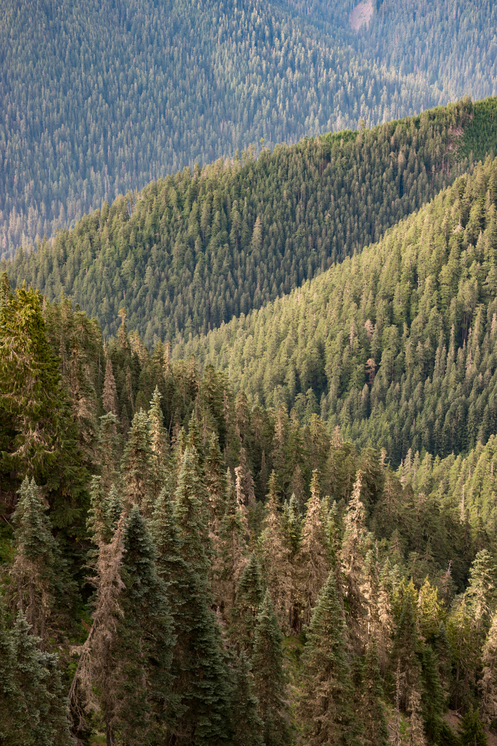 Wasim Muklashy Photography_Olympic National Park_High Divide Loop_038.jpg