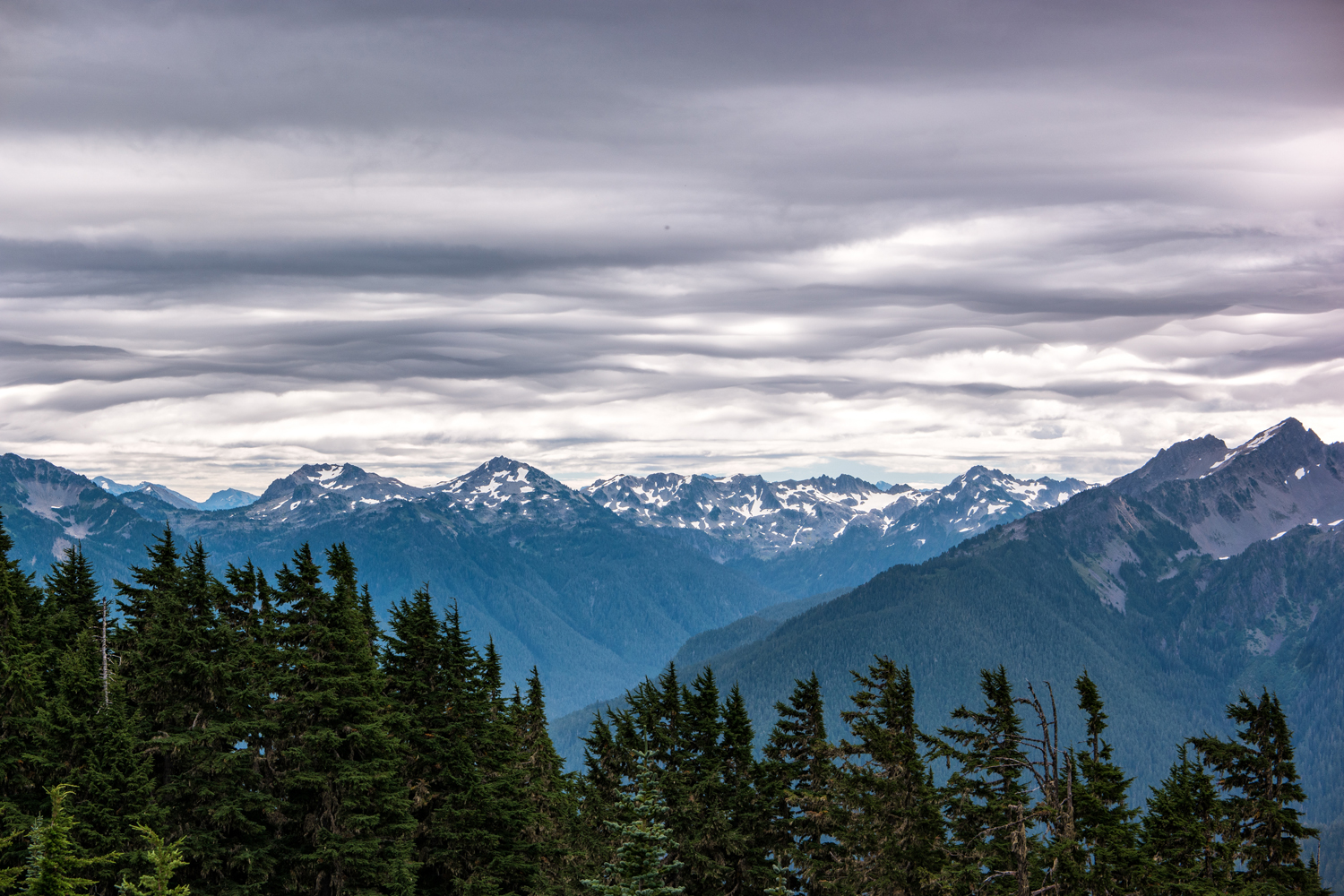 Wasim Muklashy Photography_Olympic National Park_High Divide Loop_043.jpg