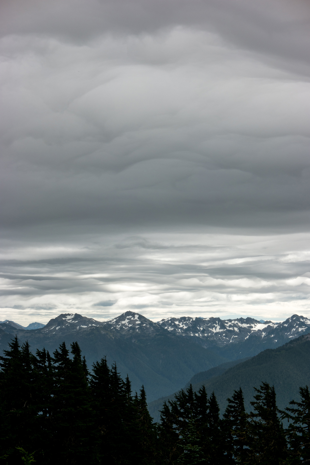 Wasim Muklashy Photography_Olympic National Park_High Divide Loop_046.jpg
