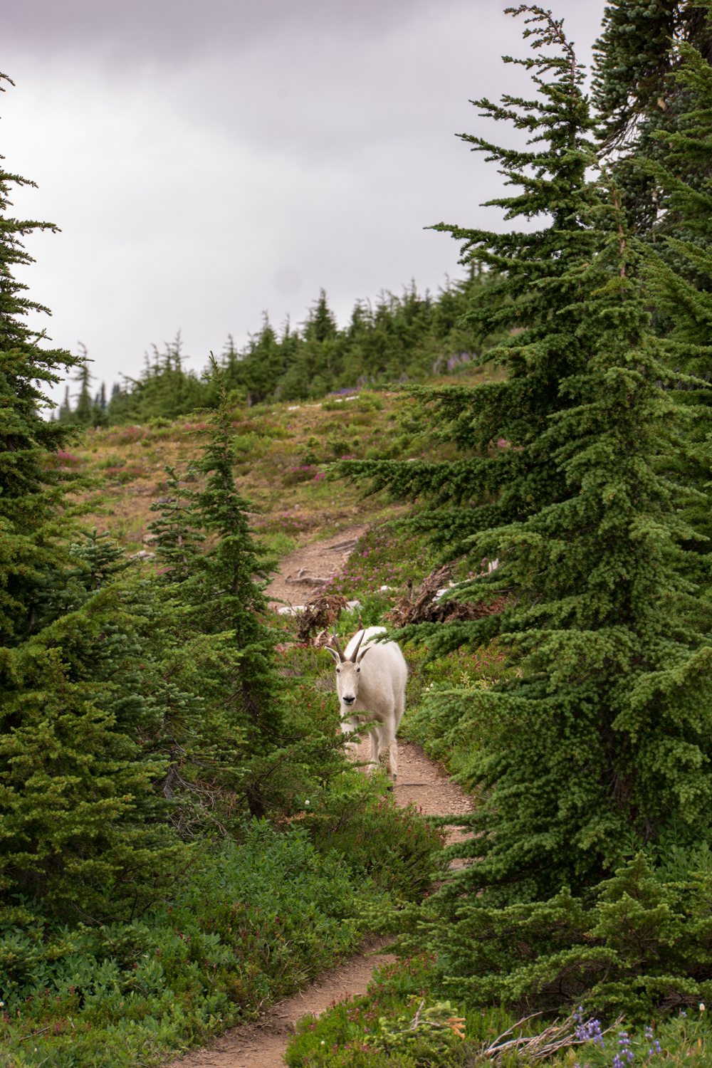 Wasim Muklashy Photography_Olympic National Park_High Divide Loop_048.jpg