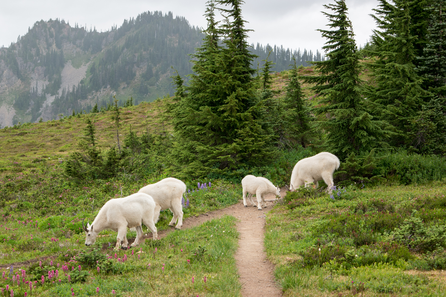 Wasim Muklashy Photography_Olympic National Park_High Divide Loop_049.jpg