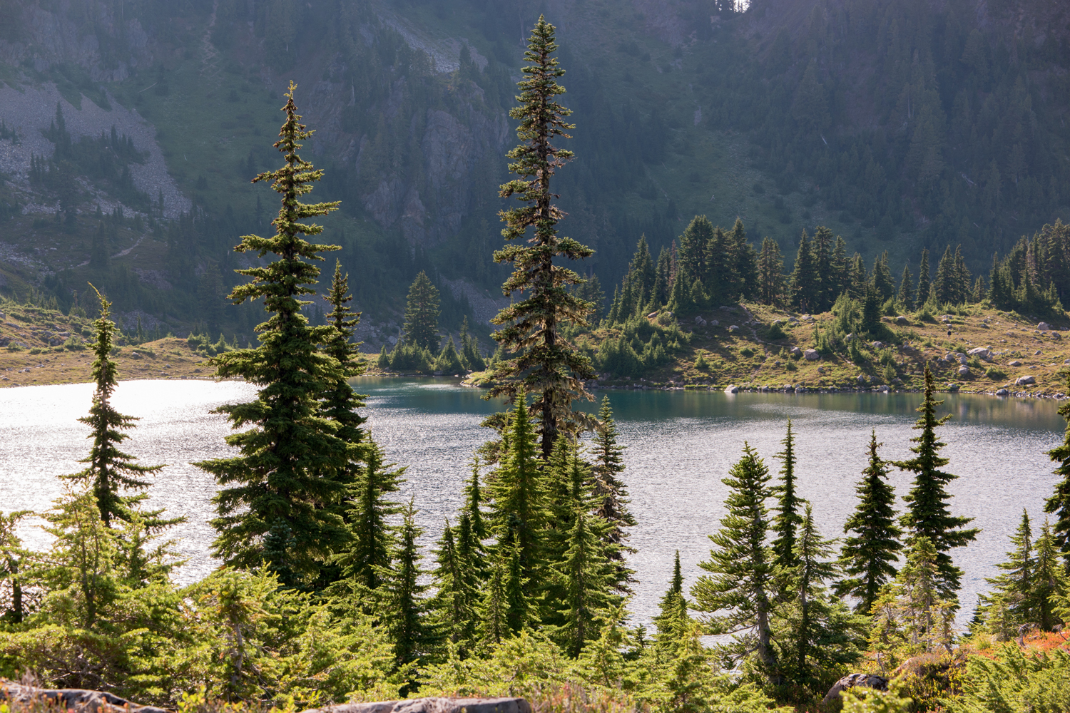 Wasim Muklashy Photography_Olympic National Park_High Divide Loop_065.jpg