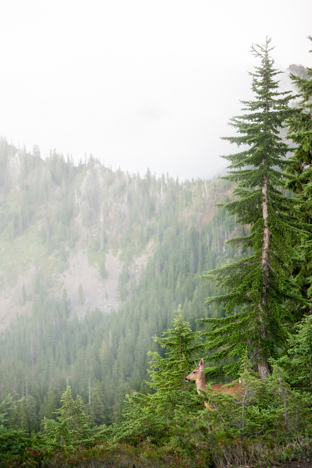 Wasim Muklashy Photography_Olympic National Park_High Divide Loop_070.jpg