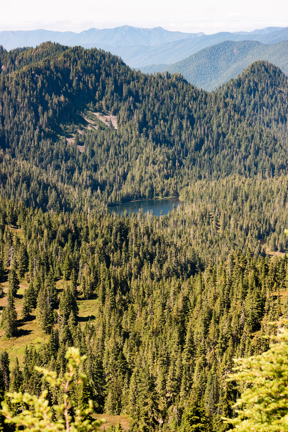 Wasim Muklashy Photography_Olympic National Park_High Divide Loop_085.jpg