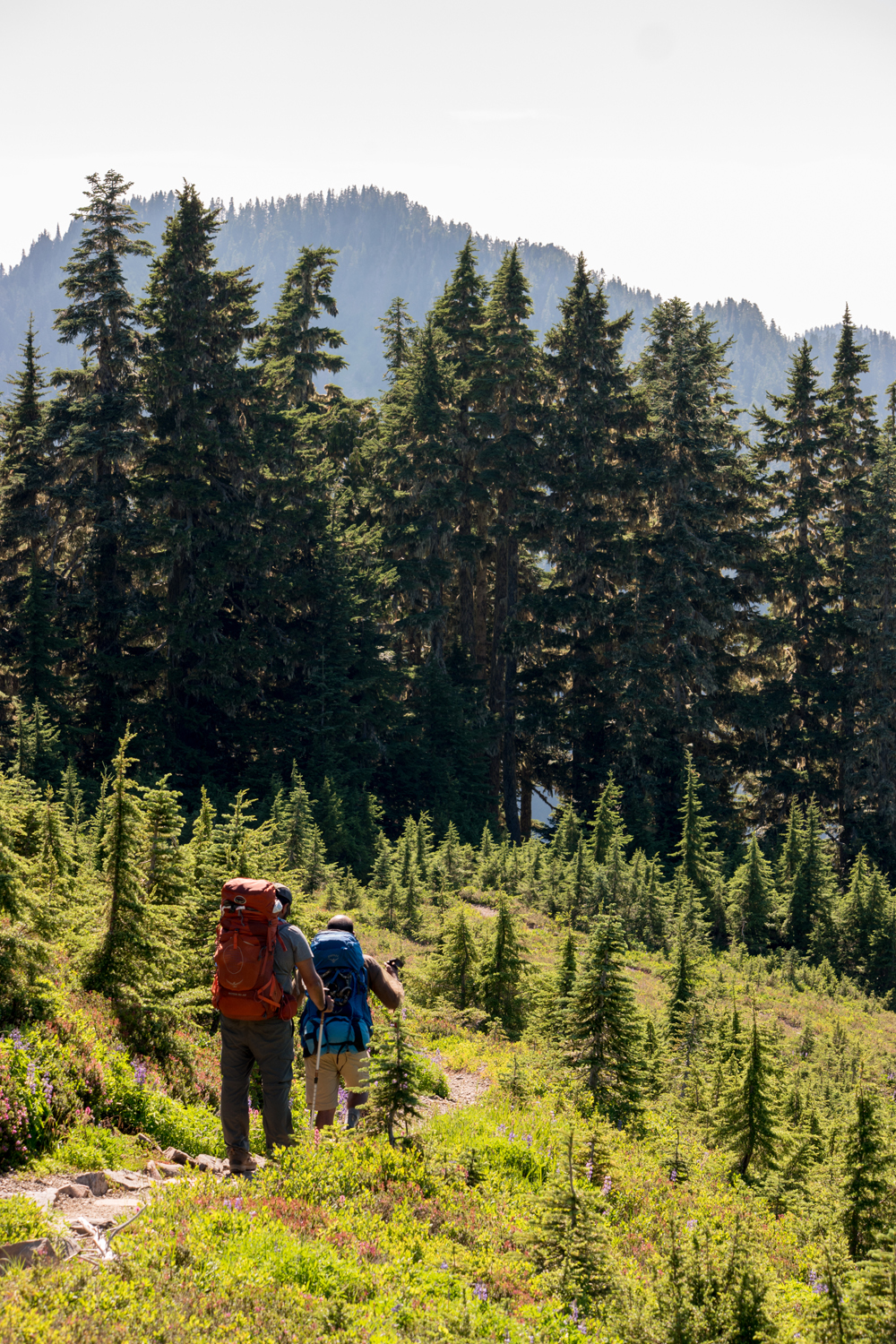 Wasim Muklashy Photography_Olympic National Park_High Divide Loop_097.jpg