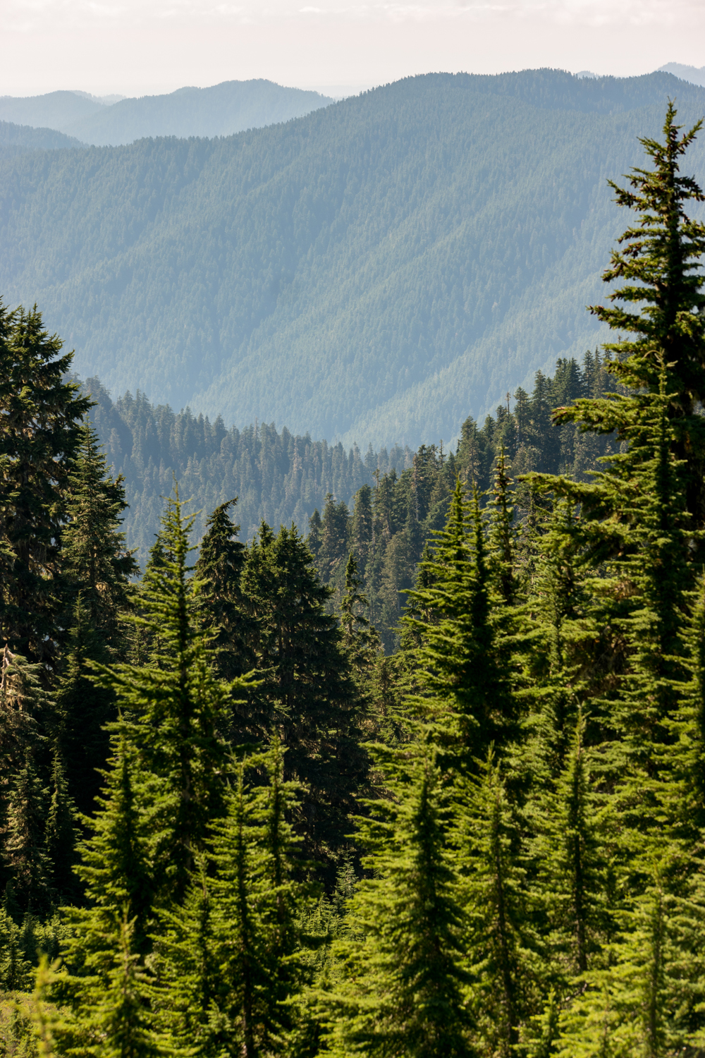 Wasim Muklashy Photography_Olympic National Park_High Divide Loop_099.jpg