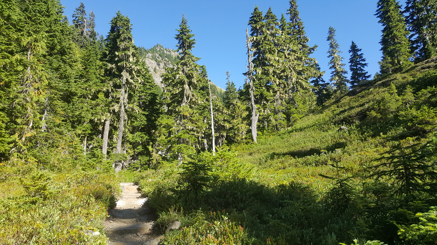 Wasim Muklashy Photography_Olympic National Park_High Divide Loop_113.jpg