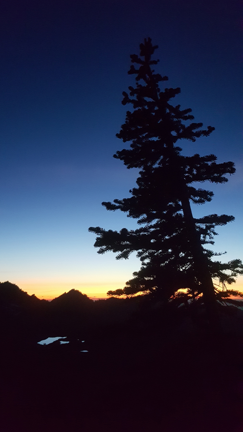 Wasim Muklashy Photography_Olympic National Park_High Divide Loop_123.jpg