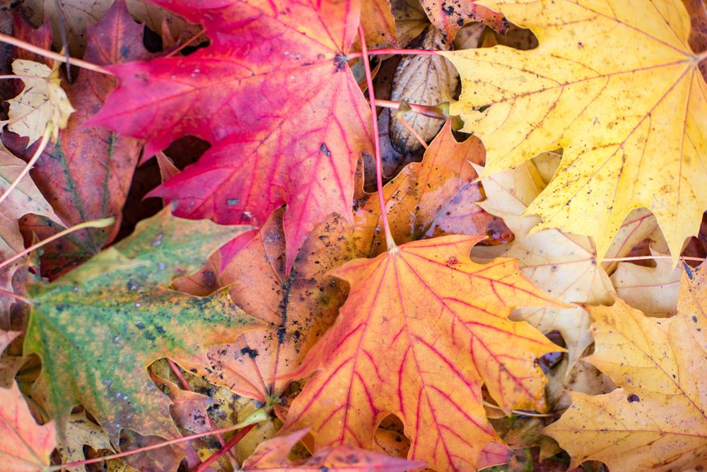 Wasim Muklashy Photography_Portland_Oregon_Fall Colors_Autumn_Nature_012.jpg