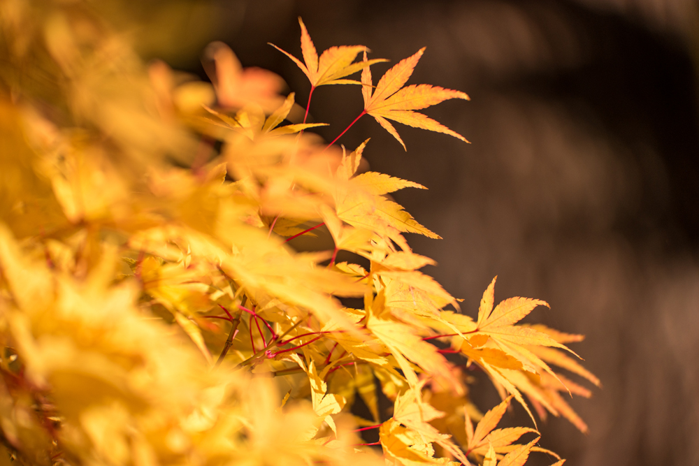 Wasim Muklashy Photography_Portland_Oregon_012.jpg
