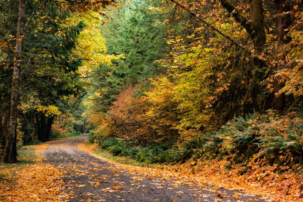Wasim Muklashy Photography_Portland_Oregon_12.jpg