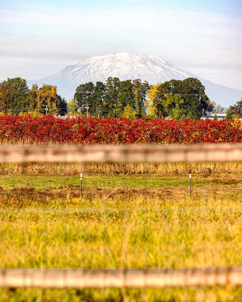 Wasim Muklashy Photography_Portland_Oregon_104.jpg