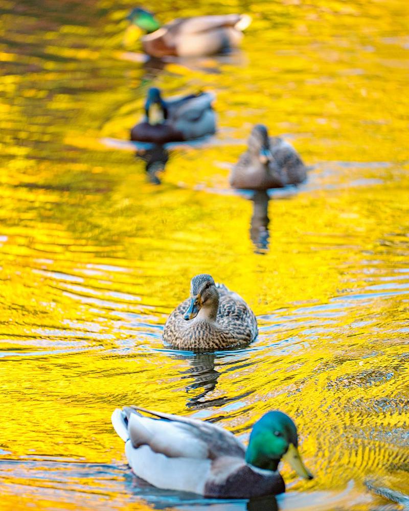 Wasim Muklashy Photography_Portland_Oregon_106.jpg