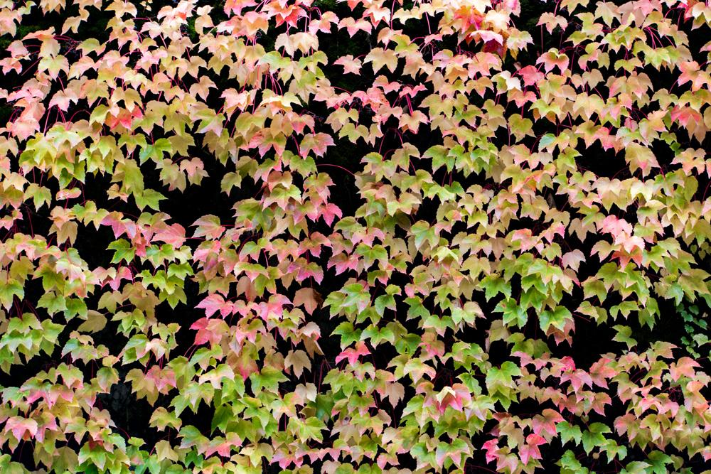 Wasim Muklashy Photography_Portland_Oregon_Fall Colors_Autumn_Nature_008.jpg