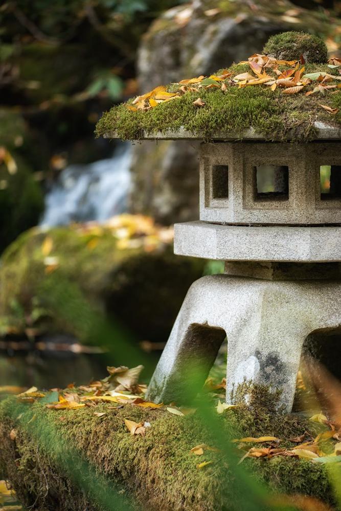 Wasim Muklashy Photography_Wasim of Nazareth_Japanese Garden_Fall_Portland_Oregon_05.jpg
