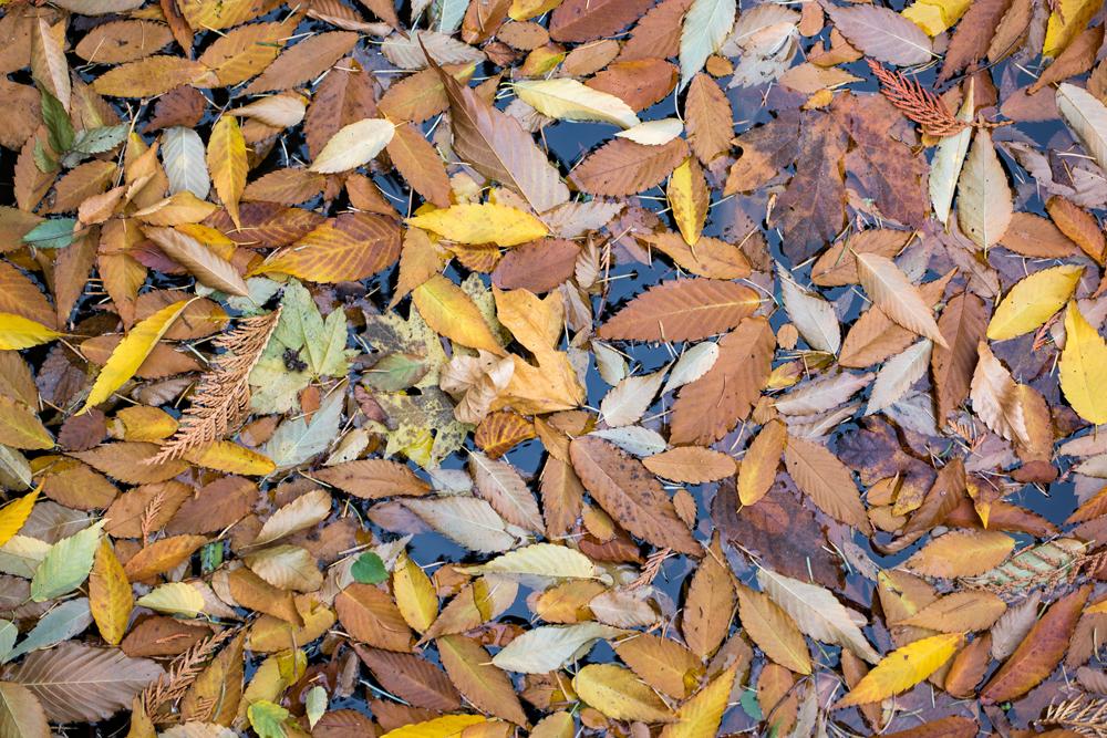 Wasim Muklashy Photography_Wasim of Nazareth_Japanese Garden_Fall_Portland_Oregon_07.jpg
