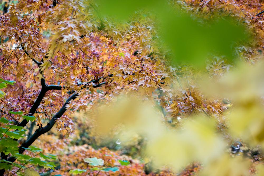 Wasim Muklashy Photography_Wasim of Nazareth_Japanese Garden_Fall_Portland_Oregon_18.jpg