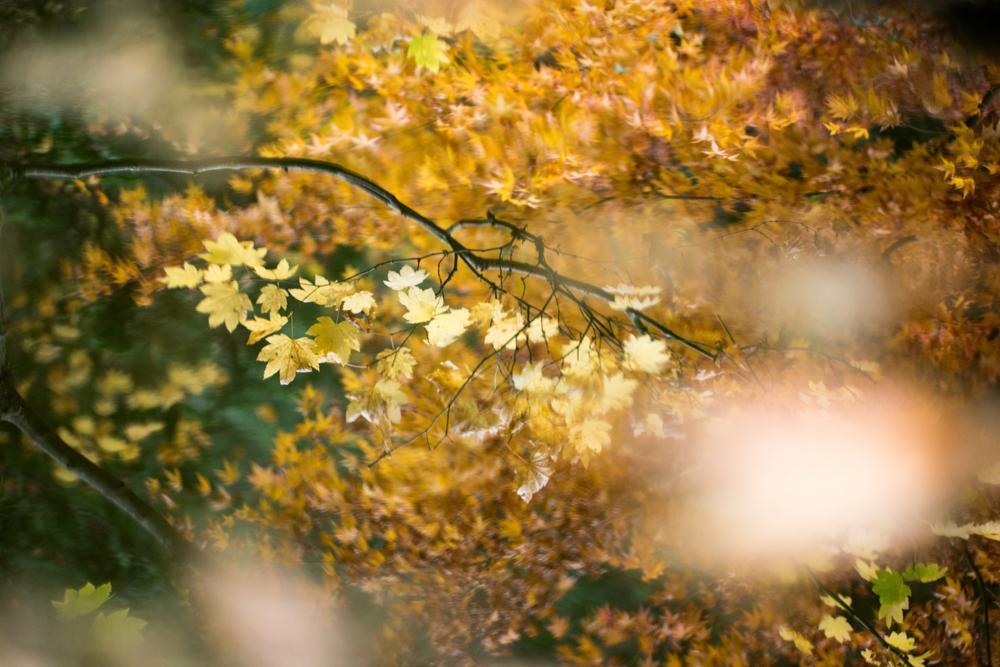 Wasim Muklashy Photography_Wasim of Nazareth_Japanese Garden_Fall_Portland_Oregon_21.jpg