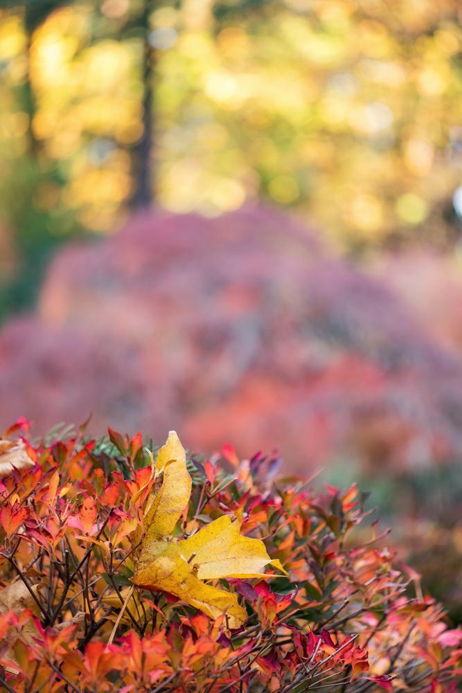 Wasim Muklashy Photography_Wasim of Nazareth_Japanese Garden_Fall_Portland_Oregon_25.jpg