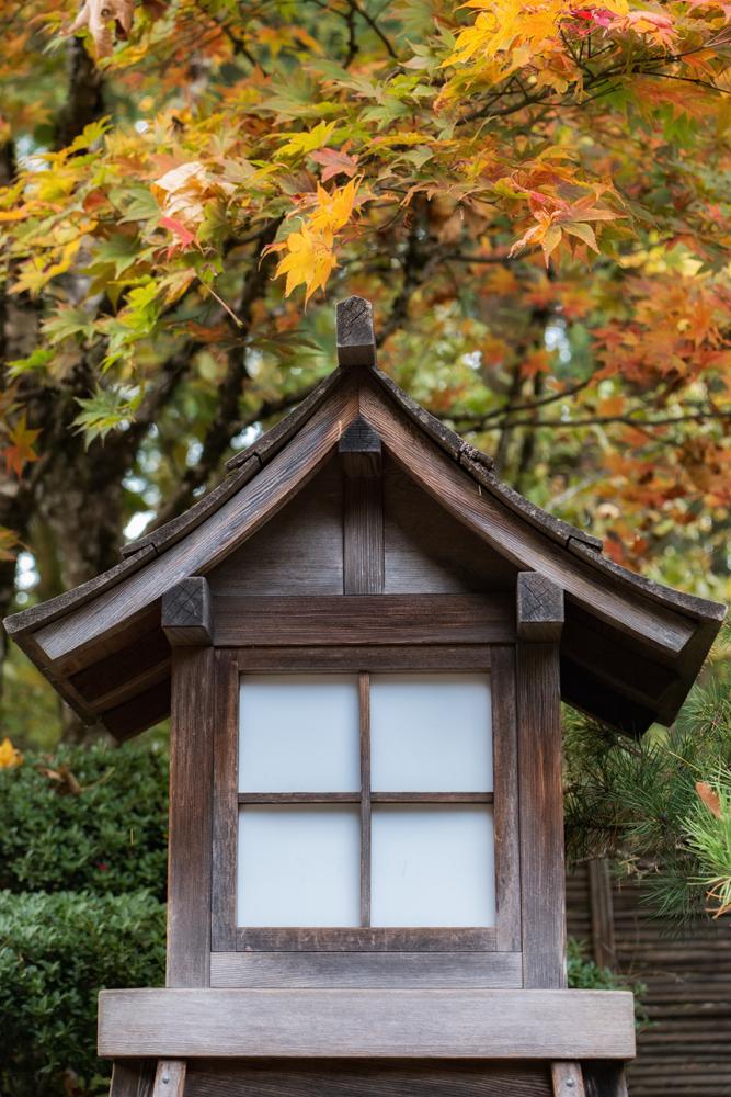 Wasim Muklashy Photography_Wasim of Nazareth_Japanese Garden_Fall_Portland_Oregon_30.jpg