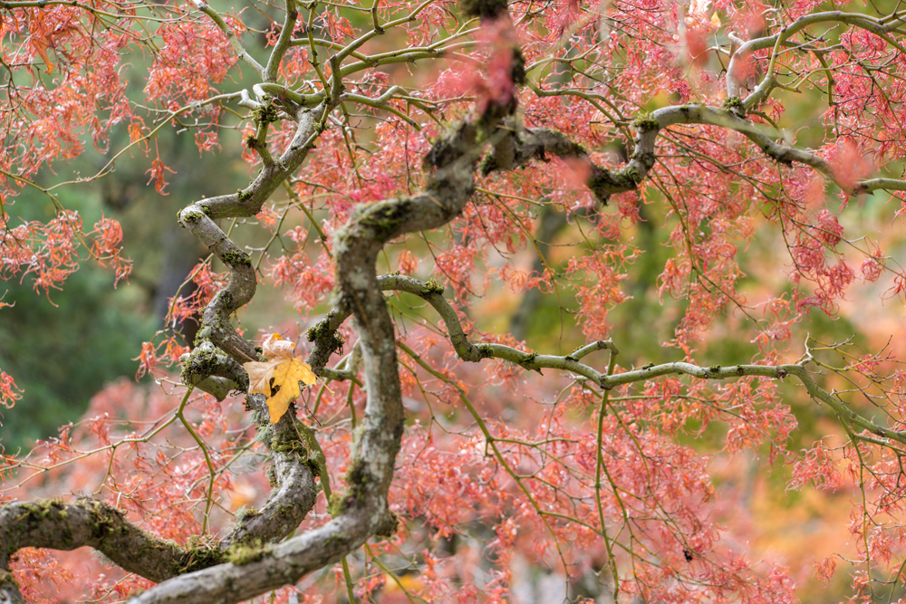 Wasim Muklashy Photography_Wasim of Nazareth_Japanese Garden_Fall_Portland_Oregon_35.jpg