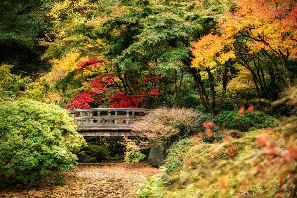 Wasim Muklashy Photography_Wasim of Nazareth_Japanese Garden_Fall_Portland_Oregon_37.jpg