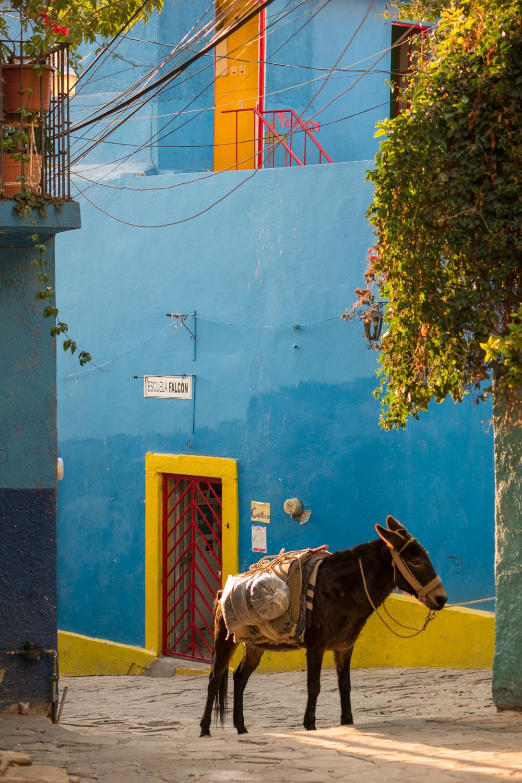 Wasim Muklashy Photography_-SAM_8552.jpg