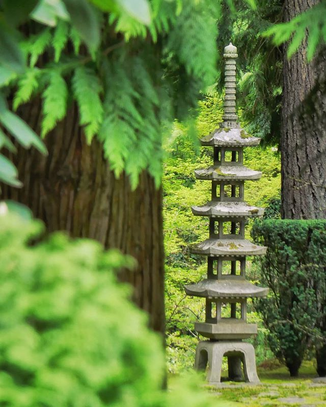 - seeking structure. - a portland japanese garden zen moment.  book 3.  season 1. chapter 48. - www.wasimofnazareth.com - #adventure #beautiful#nature #explore #travel #trip #zen #meditation#pdx #pdxlife #pdxnow #portland #oregon #plants #green #trees #garden #forest #walking #design #walking #lines