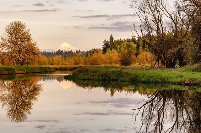 - tha hood. - a vancouver, washington zen moment. book 3.  season 1. chapter 52. spring scavenging on sauvie. - www.ByWasim.com - #adventure #beautiful #explore #instadaily #travel #instatravel #trip #zen #washingtonstate #pdxlife #light #spring #rivers #colors #roadtrip #sunset #sky #clouds #landscape #nature #naturephotography #reflection #mthood #mthoodterritory