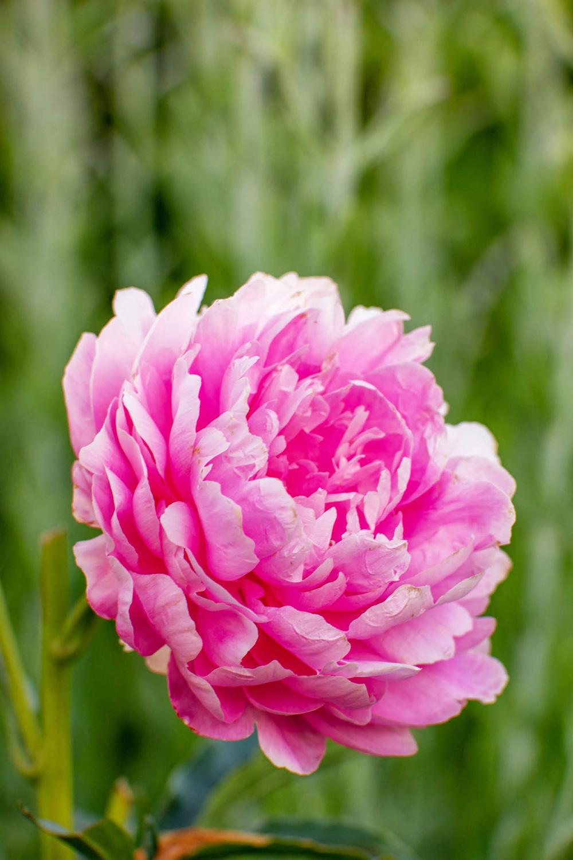 Wasim Muklashy Photography_Oakwood Gardens_Hillsboro_Oregon_105.jpg