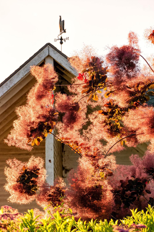 Wasim Muklashy Photography_Oakwood Gardens_Hillsboro_Oregon_103.jpg