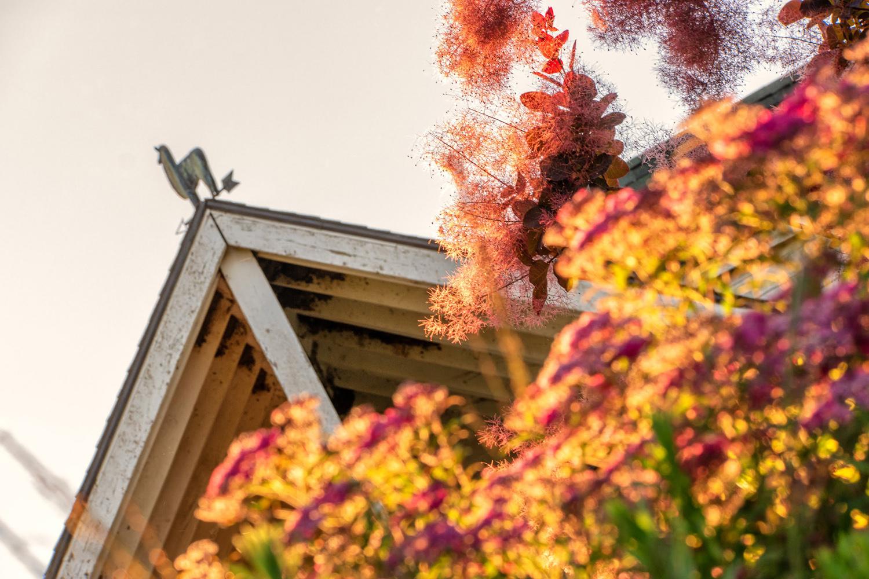Wasim Muklashy Photography_Oakwood Gardens_Hillsboro_Oregon_106.jpg