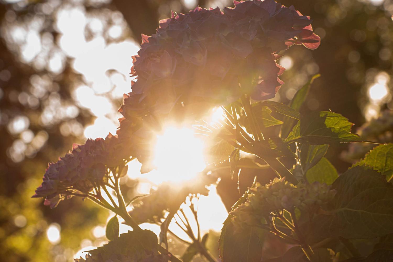 Wasim Muklashy Photography_Oakwood Gardens_Hillsboro_Oregon_111.jpg