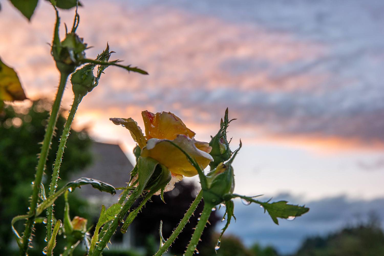Wasim Muklashy Photography_Oakwood Gardens_Hillsboro_Oregon_133.jpg