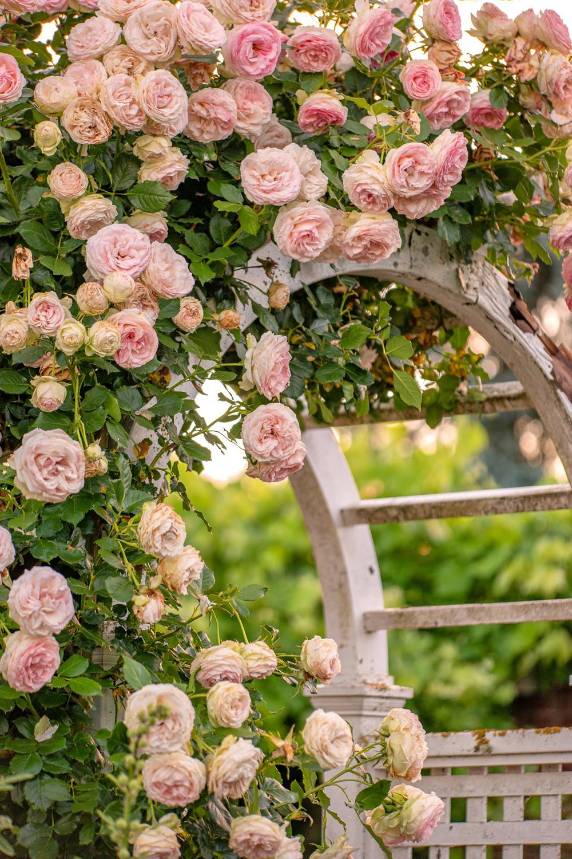 Wasim Muklashy Photography_Oakwood Gardens_Hillsboro_Oregon_137.jpg