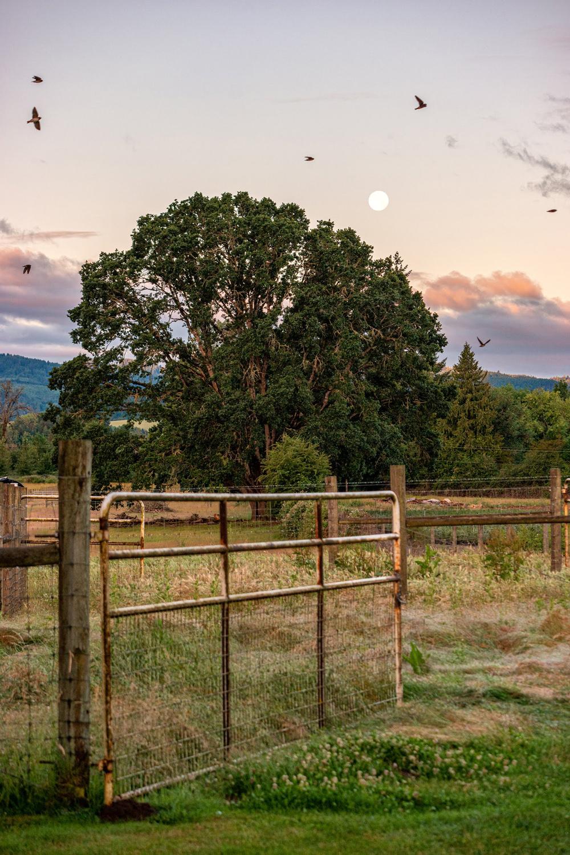 Wasim Muklashy Photography_Oakwood Gardens_Hillsboro_Oregon_140.jpg