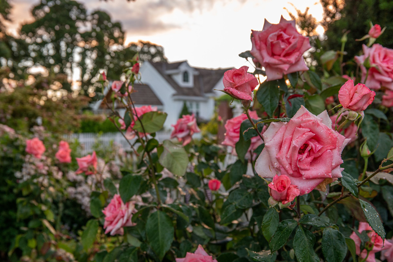 Wasim Muklashy Photography_Oakwood Gardens_Hillsboro_Oregon_144.jpg
