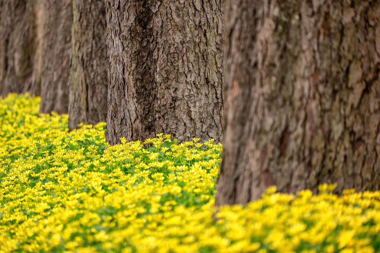 Wasim Muklashy Photography_Portland_Oregon_Spring_Tom McCall Waterfront_101.jpg