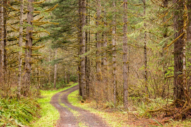 Wasim Muklashy Photography_Portland Oregon_107.jpg