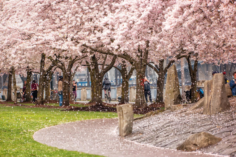 Wasim Muklashy Photography_Portland_Oregon_Spring_Tom McCall Waterfront_116.jpg