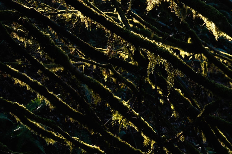 Wasim Muklashy Photography_Wasim of Nazareth_Forest Park_Portland_Oregon_106.jpg