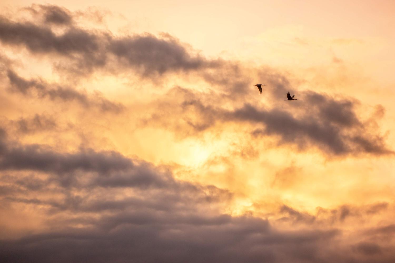 Wasim Muklashy Photography_Wasim of Nazareth_Sauvie Island_Portland_Oregon_103.jpg