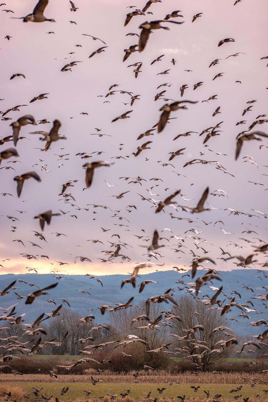 Wasim Muklashy Photography_Wasim of Nazareth_Sauvie Island_Portland_Oregon_108.jpg