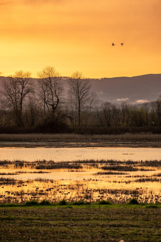 Wasim Muklashy Photography_Wasim of Nazareth_Sauvie Island_Portland_Oregon_113.jpg